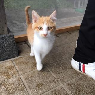 半年から一歳の猫がいます。