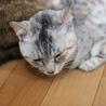 穏やかな性格の子猫 サムネイル2