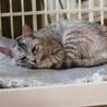 穏やかな性格の子猫 サムネイル3