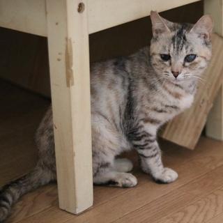 穏やかな性格の子猫