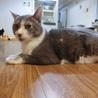 猫の方舟里親会・1歳以上の猫たちの里親会