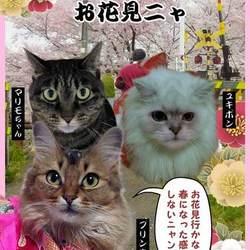 見ないと損ニャ♪猫と一緒のお花見の記事更新ニャ