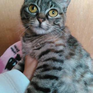 沖縄の子猫ちゃん