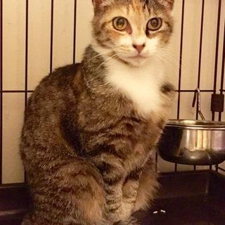 小柄で美しい穏やかな三毛猫姉妹ペアで