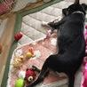 おもちゃ広げてお昼寝