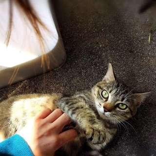 保護ネコ キジトラちゃん 女の子