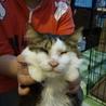 目の見えない猫 ミーコを家族に迎えて下さい