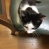 子猫2月24日生まれ黒白