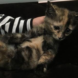 美猫サビちゃん♪
