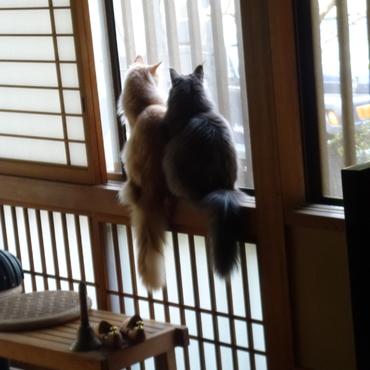 取り合いで喧嘩が起こる程人気の窓辺