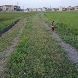 「野原を散歩」サムネイル1