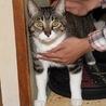 【急募】飼い主が亡くなってしまった猫です
