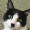 右手治療中☆里親募集【子猫の家族になってください】 サムネイル6
