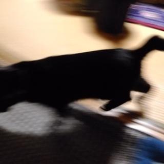 黒猫ひかりちゃん