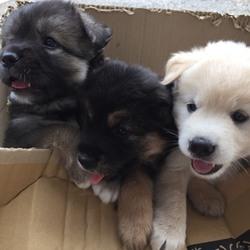 保護犬の譲渡会開催します
