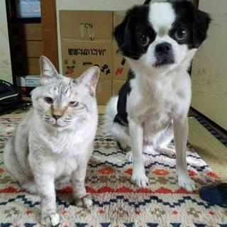 狆と猫の仲良しをコンビで迎えてくれませんか?