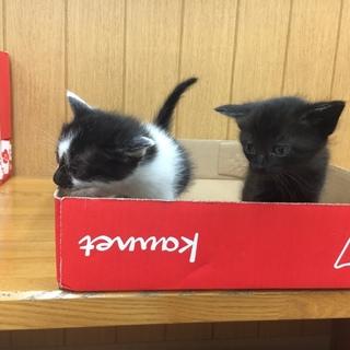 黒猫・黒白子猫姉妹