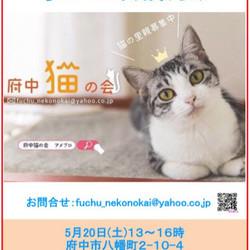 猫の譲渡会、開催【府中猫の会】 サムネイル1