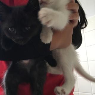 姉妹の仔猫を保護しました。