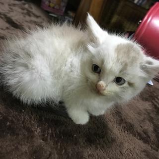 捨てられていた子猫の里親さん募集します