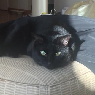 おっとりまったり人馴れ抜群・性格優しい黒猫くん