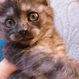 生後2ヶ月くらいの仔猫です♪