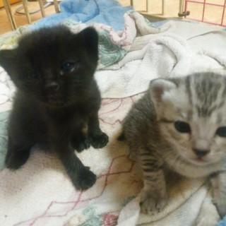 メス猫2匹