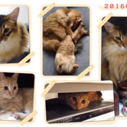 うちの猫たちのフォトアルバムを作りました
