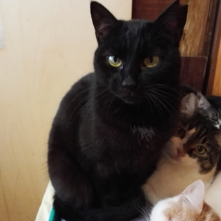 ちょっぴりシャイな仔猫の里親さんを募集します。