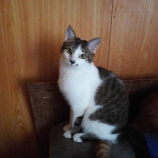 スラリとしたしっぽのカワイイ仔猫です