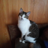 里親決定♪スラリとしたしっぽのカワイイ仔猫です