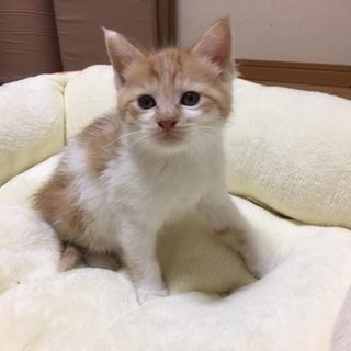 3月20日生まれの元気な赤ちゃん猫です。