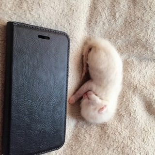 29年4月24日に産まれた白猫です。