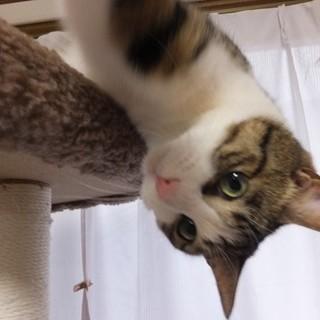 マイペースな美猫