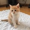 4月20日生まれの優しい猫です。