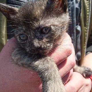 生後1か月、幸せを呼ぶサビ猫ちゃん