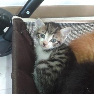元気いっぱい生後約1ヶ月の子猫ちゃんたち!