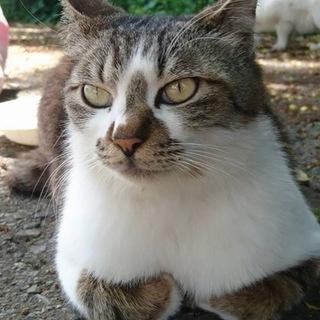 みんなのアイドル、甘えん坊な猫嫌いのハッチ