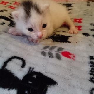 赤ちゃん猫 多数