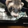 名前はでぐちゃん。好奇心旺盛でとても可愛い子です。