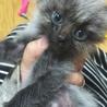 生後1ヵ月半の子猫