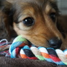 生まれて3ヶ月!可愛い子犬です
