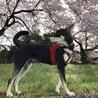今年も桜の下で