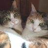 スリスリごろごろエンドレス三毛猫姉妹