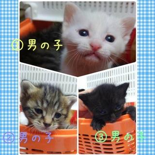 生後約3週!可愛い子猫3兄弟♬