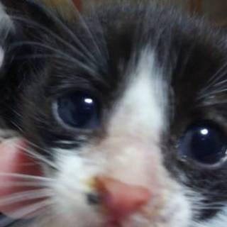 子猫1ヶ月