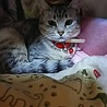 地域猫現場に遺棄されたひめちゃん
