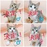 2017年2月1日生まれの仔猫4匹です!