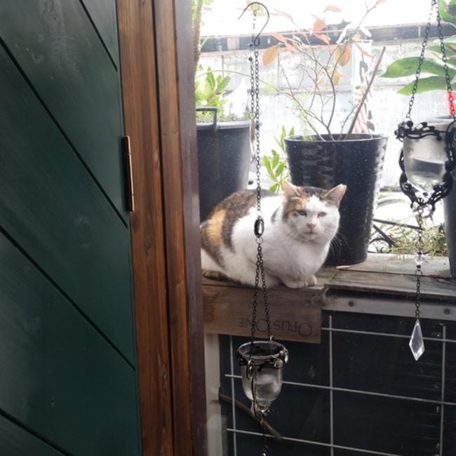 なまえのない猫のカバー写真