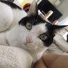 2年前、人慣れしてなくても気長に待つという猫初心者の独身男性の里親さんの元で幸せになったネネちゃん。姉妹のココちゃんと仲良しです。
